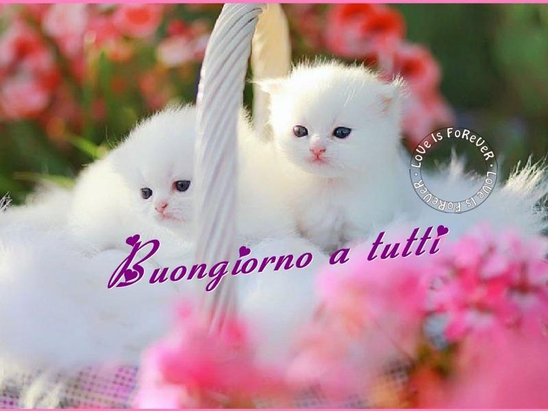 Un dolcissimo e batuffoloso buongiorno a tutti amici for Foto buongiorno amici